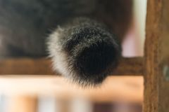 The cat`s tail was trembling. stock image