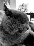 cat& x27; s twarz w górę obrazy royalty free