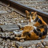 Cat's View. Cat lay on rail Stock Photos