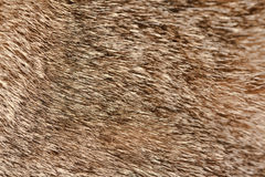 Cat's wool. Stock Images