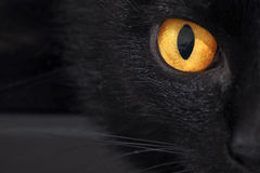 A cat's yellow eye in black Royalty Free Stock Photos