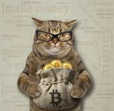 Cat with a sack of bitcoins 2. The cat in glasses is holding a bag with bitcoins stock images