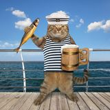 Cat sailor with beer on quay stock photo