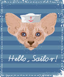 Cat sailor. Stock Images
