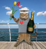 Cat with wine on boardwalk stock photography