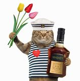 Cat sailor with whiskey and tulips royalty free stock photo