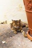 Cat in San Juan Royalty Free Stock Photo