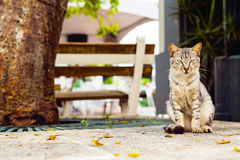 Cat in San Juan Stock Photography