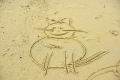 Cat on the sand Stock Images