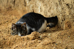 Cat in the sand. Cat hiding in the sand Royalty Free Stock Image