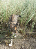 Cat on sandy beach Stock Photography