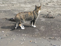 Cat on sandy beach Royalty Free Stock Photos