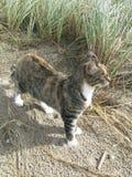 Cat on sandy beach Stock Photos