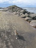 Cat on sandy beach Stock Photo
