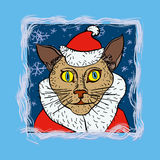 Cat santa Royalty Free Stock Image