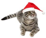 Cat with a santa cap Stock Photo