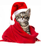 Cat with santa cap Stock Images