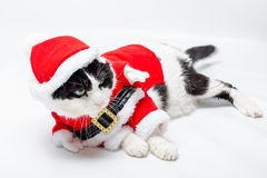 Cat Santa Christmas royalty free stock photography