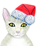 Cat Santa Claus Stock Photos