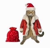 Cat Santa Claus en giften stock foto