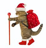 Cat with Christmas gifts royalty free stock photos
