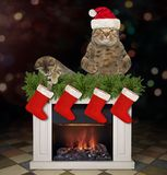 Cat and a kitten near the fireplace royalty free stock photos