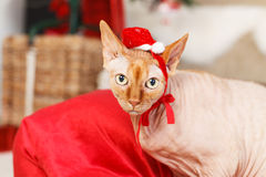 Cat with Santa Claus red hat - Stock Image Stock Photography