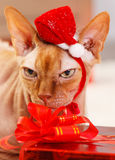 Cat with Santa Claus red hat - Stock Image Royalty Free Stock Images