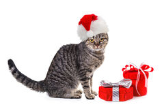 Cat in Santa Claus xmas red hat with gifts. Stock Photography
