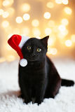 Cat in Santa hat Royalty Free Stock Images