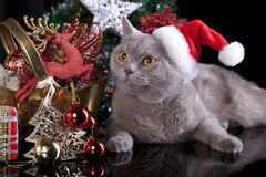 Cat in a santa hat Stock Photography