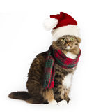 Cat with Santa Hat. A brown tabby cat wearing plaid scarf and santa hat on white background Stock Photo