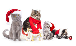 Cat  a santa hat Royalty Free Stock Images