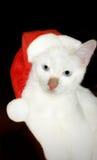 Cat in santa hat. Pet white kitten costume Stock Photos