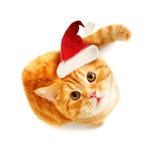 Cat in Santa Hat. Top View Stock Photos