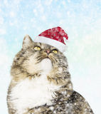 Cat in santa hat under the snow Stock Photo