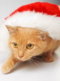 Cat with Santa hat Royalty Free Stock Photography
