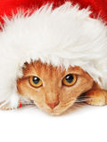 Cat with Santa hat Stock Photos