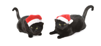 Cat Santa nera - gatto sveglio di natale su fondo bianco fotografia stock