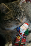 Cat with Santa Toy Stock Images