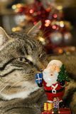 Cat with Santa Toy Royalty Free Stock Photography
