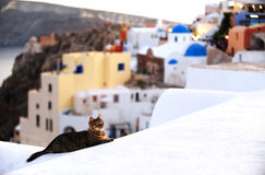 Cat in Santorini Greece. A cat on top of a white house in Santorini, Greece. This shot was taken moments after the sunset Royalty Free Stock Image