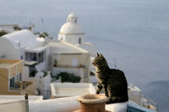 Greece Cat Royalty Free Stock Photo