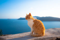 A cat in Santorini Stock Photography