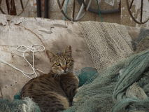 A cat sat on fishing nets Stock Photography
