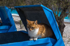 Cat in a recycling bin Royalty Free Stock Image