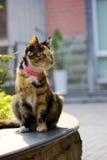 Cat. The cat sat in the sun Stock Image