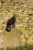 Cat sat on a Tombstone stock photography