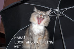 Cat sat under an umbrella Royalty Free Stock Photo