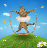 A cat with sausage skipping rope Royalty Free Stock Images